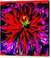 Dahlia Rouge Texture Avec La Frontiere  Canvas Print