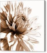 Dahlia Sepial Flower Canvas Print