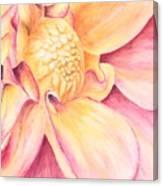 Dahlia Study Canvas Print