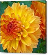 Dahlias Art Prints Orange Dahlia Flowers Baslee Troutman Canvas Print