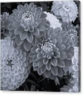 Dahlias Multi Bw Canvas Print