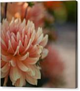 Dahlias Season Canvas Print