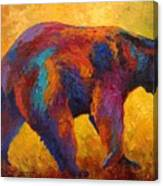 Daily Rounds - Black Bear Canvas Print