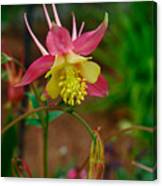 Dainty Flower Canvas Print