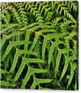 Dainty Fronds Canvas Print