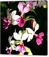 Dainty Orchids Canvas Print