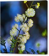 Dainty Wildflowers On Blue Bokeh By Kaye Menner Canvas Print