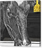 Dairy Cow Number 5216 Canvas Print