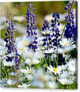 Daisies And Lupine Canvas Print