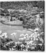 Daisies At Queens View In Greyscale Canvas Print