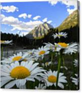 Daisies By Mcdonald Creek With Mt Cannon, Glacier Park Canvas Print
