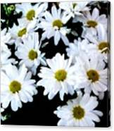 Daisies By The Dozen Canvas Print