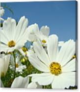 Daisies Flowers Art Prints White Daisy Flower Gardens Canvas Print