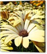 Daisies Flowers Landscape Art Prints Daisy Floral Baslee Troutman Canvas Print