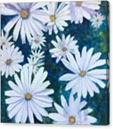 Daisies Galore Canvas Print