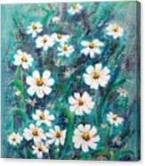 Daisies Golden Eyed Canvas Print
