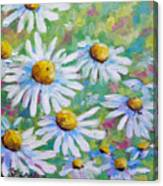 Daisies In Spring Canvas Print