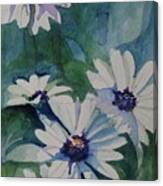 Daisies In The Blue Canvas Print
