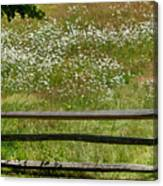Daisies On The Vineyard Canvas Print