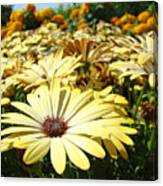 Daisies Yellow Daisy Flowers Garden Art Prints Baslee Troutman Canvas Print