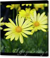 Daisy A Day Canvas Print