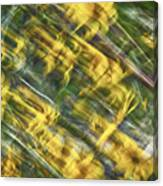 Daisy Abstract Canvas Print