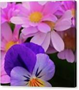 Daisy And Pansy Canvas Print