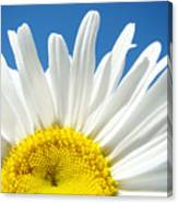 Daisy Art Prints White Daisies Flowers Blue Sky Canvas Print