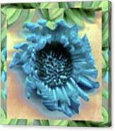 Daisy Blue Frame Canvas Print