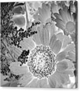 Daisy Bouquet In Black And White Canvas Print