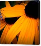 Daisy Bug Canvas Print