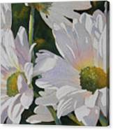 Daisy Bunch Canvas Print