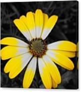 Daisy Crown Canvas Print