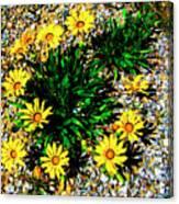 Daisy Decor Canvas Print