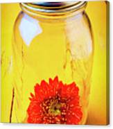 Daisy In Glass Jar Canvas Print