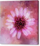 Daisy In Magenta Canvas Print