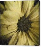 Daisy Luscious Canvas Print