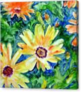 Daisy May Canvas Print