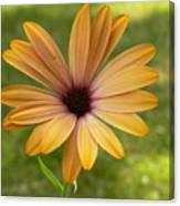 Daisy Smiles Canvas Print