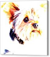 Daisy The Yorkie Canvas Print
