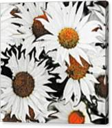 Daisy With A Twist Canvas Print
