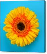 Daisy - Yellow - Orange On Light Blue Canvas Print