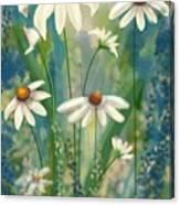 Daisy's Blues.  Canvas Print