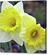 Dallas Daffodils 79 Canvas Print