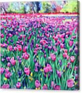 Dallas Tulips Canvas Print