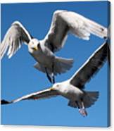 Aerial Dance Of The Seagulls Canvas Print