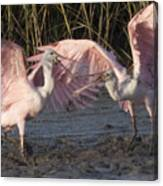 Dance Of The Spoonbill Canvas Print
