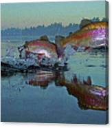 Dance Of The Trout Canvas Print