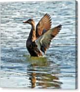 Dancing Duck Canvas Print