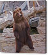 Dancing Grizzly Canvas Print